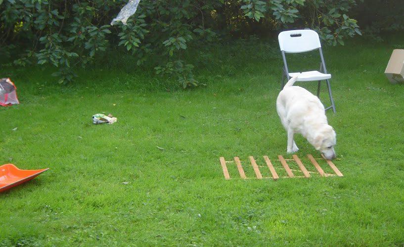 Proposer à nos chiens des explorations: idéal comme stimulations mentales