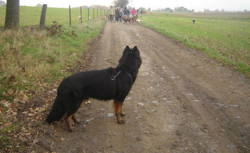 Les promenades sans laisse ou avec une longue laisse: libre de ses mouvements et libre de faire des choix