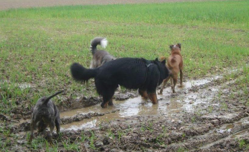 Le chien est un animal social: il aime la compagnie, que ce soit la nôtre ou celle de ses congénères